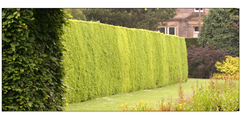 ayrshire landscape gardener